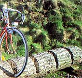 Baumstämme als Radständer